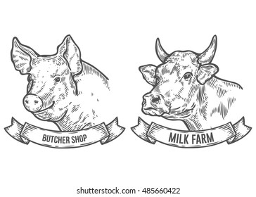 Cow and pig head. Milk farm, butcher shop. Hand drawn sketch in a graphic style. Vintage vector engraving illustration with ribbon for poster, web. Isolated on white background