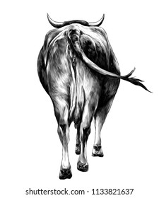 the cow is a rear view of the ass a little and sticking his head and horns, sketch vector graphics monochrome illustration on white background