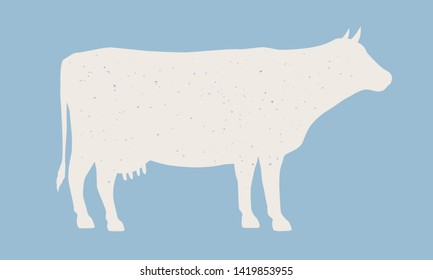 Cow silhouette. Cow icon isolated on blue background. Graphic design for meat shop, grocery, farmers market. Vintage typography. Vector Illustration
