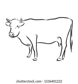 Cow sketch , contour vector illustration