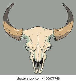 Cow Skull Vector Illustration