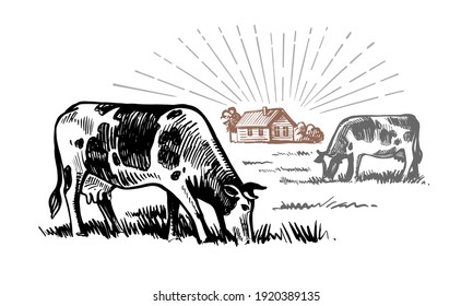 cow stands in a village next to houses