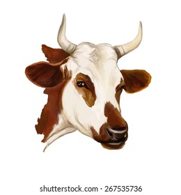 cow vector illustration  hand drawn  painted watercolor