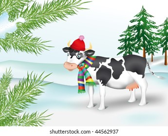 Cow in winter coniferous wood; Spotty cow in a cap and in a scarf