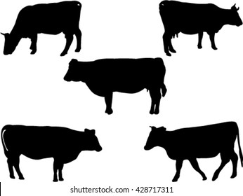 cows and bulls silhouette collection vector