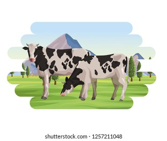 Cows farm animal