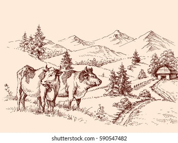 Cows farm drawing, dairy label design grazing cattle