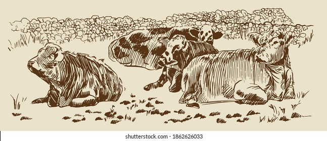 Cows in field with dry stone wall paddock Hand drawn sketch. Farm rural landscape. Vector illustration
