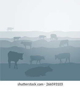 Cows graze in the field, landscape, sky, grass, pasture. Blue, gray silhouette background. Vector