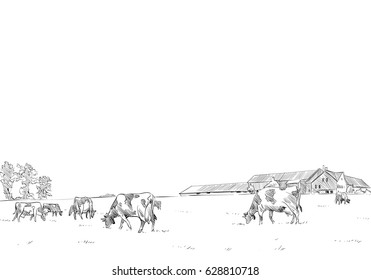 Cows are grazing in a meadow. Rural landscape. Farm sketch hand drawn vector illustration.