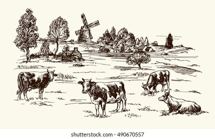 Cows Grazing On Meadow Hand Drawn Illustration