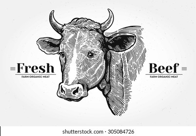 Cows head, in a graphic style hand drawn illustration.