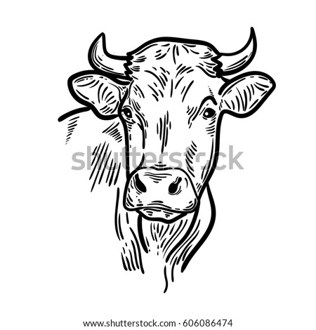cows head hand drawn sketch graphic stock vector royalty free