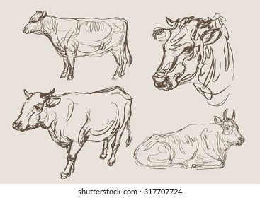 cows vector, hand draw sketch