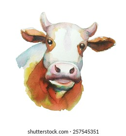 Cow,water color  illustration in vector