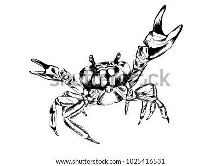 Crab Claws Stock Vector Royalty Free 1025416531