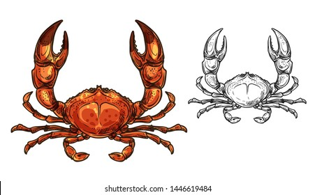Crab sea animal sketch of seafood and marine crustacean vector design. Red shellfish, ocean crawfish or lobster with raised claws. Wild underwater animal, fishing and delicacy meal themes