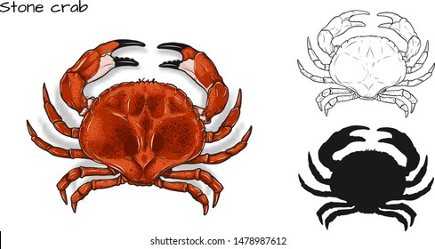 Crab vector by hand drawing.crab silhouette on white background.Stone Crabs art highly detailed in line art style.Animal pictures for coloring