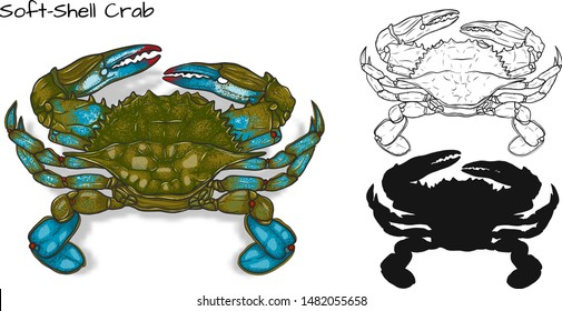 Crab vector by hand drawing.crab silhouette on white background.Soft Shell Crabs art highly detailed in line art style.Animal pictures for coloring