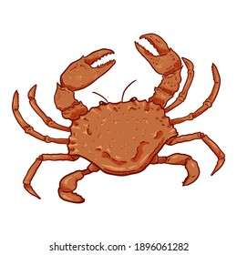 Crab Vector Cartoon Illustration on White Background