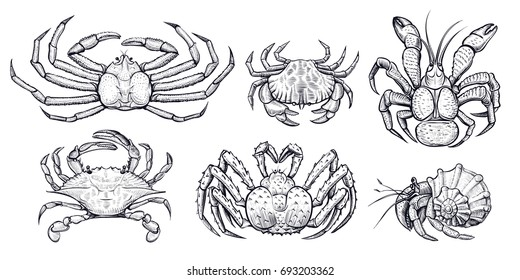 Crab vector set. Hand drawn illustrations of engraved line. Collection of realistic sketches various crabs, sea animals.