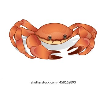 Crabs Vector Illustration