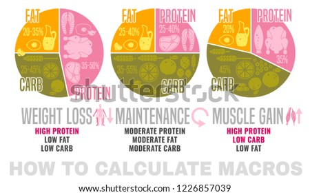 Crafting Your Macronutrient Ratio Fat Loss Stock Vector Royalty