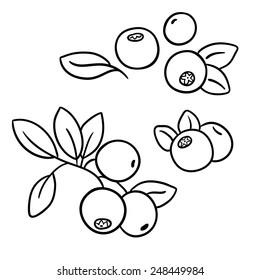Cranberries. Line illustration. Isolated black&white illustration on white background.