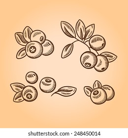 Cranberries. Retro engraving style illustration. Hand drawn.