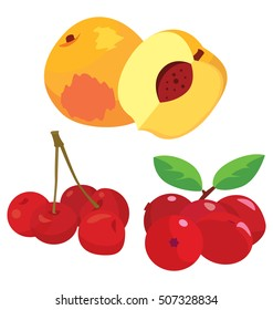 cranberry, cherry, peach - healthy fruit. For your convenience, each significant element is in a separate layer. Eps 10