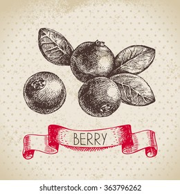 Cranberry. Hand drawn sketch berry vintage background. Vector illustration of eco food