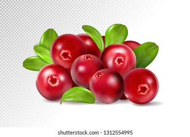 Cranberry with leaves on transparent background. Quality realistic vector, 3d illustration
