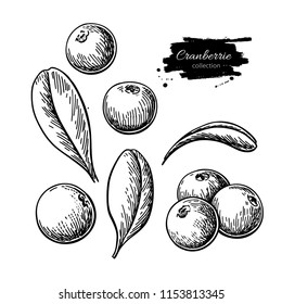 Cranberry vector drawing. Isolated berry heap sketch on white background.  Summer fruit engraved style illustration. Detailed hand drawn vegetarian food. Great for label, poster, print