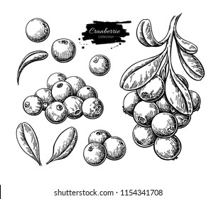 Cranberry vector drawing. Isolated berry branch sketch on white background.  Summer fruit engraved style illustration. Detailed hand drawn vegetarian food. Great for label, poster, print