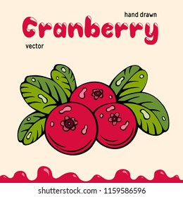 Cranberry vector illustration, berries images. Doodle cranberry vector illustration in red and green color. Cranberry berries images for menu, package design. Vector berries images of cranberry