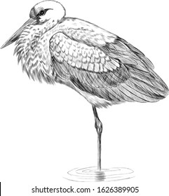 crane bird Heron stands in the water Japanese black and white sketch coloring book vector
