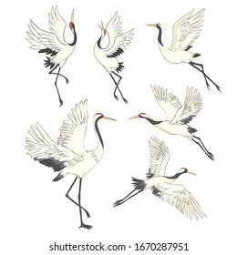 Crane bird set. illustration on white background