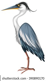 Crane with gray feather illustration