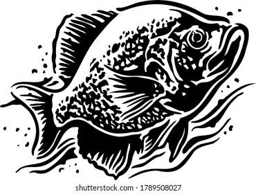 Crappie fish black and white