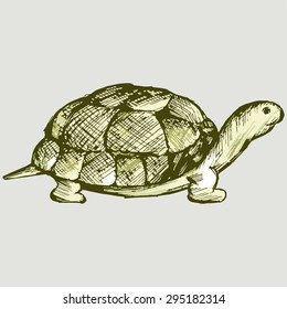 box turtle drawing images stock photos vectors shutterstock