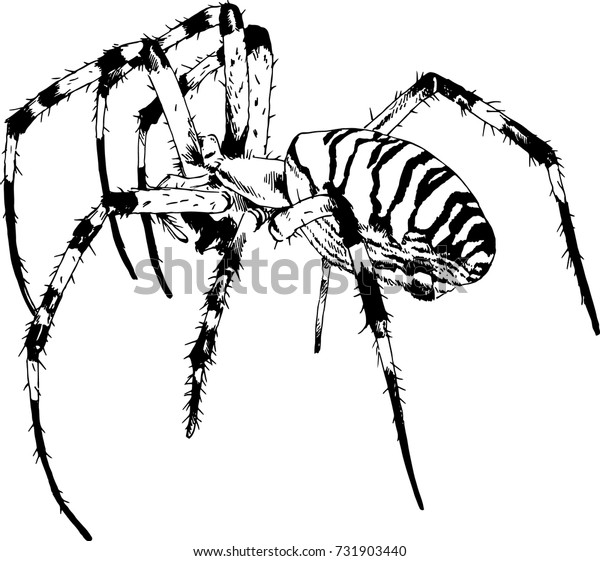 crawling spider drawn in ink by hand on a white background sketch