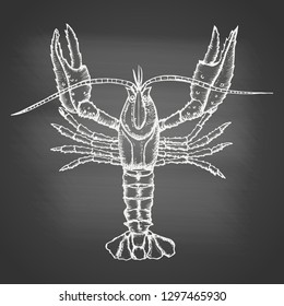 Crayfish - chalk drawing on the blackboard. Hand drawn sketch in vintage engraving style. Vector illustration of Arthropod