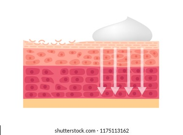 cream , foam and lotion cure dry skin vector