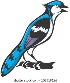 Creative Blue Jay Illustration
