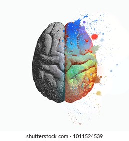 Creative concept of Left and right brain illustration with colorful on right side isolated on white background