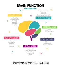 Creative human brain infographic. Psychology concept. Functions of the mind: intelligence, emotions, logic, memory, behaviour, learning. Frontal, temporal lobe, cerebellum, etc.