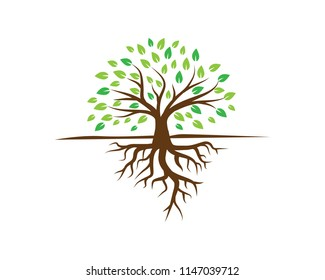 creative tree logo template, root logo template