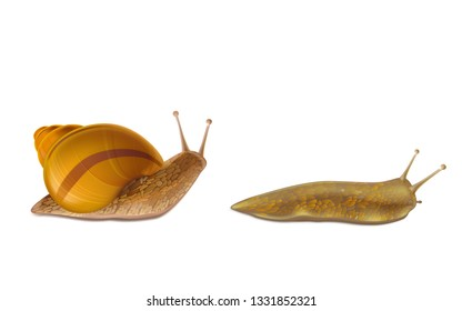 Creeping Burgundy or Roman snail and red slug 3d realistic vector icons isolated white background. French cuisine delicatessen, edible and farming European specie snail, garden pests illustrations