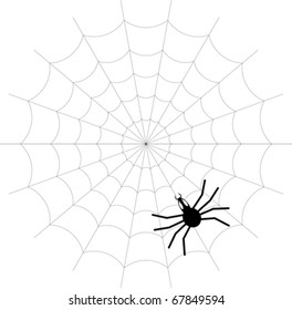 Creepy spider web - vector - eps 10