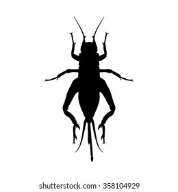 cricket. grig. Gryllus campestris. Sketch of cricket.  cricket isolated on white background. cricket Design for coloring book.  hand-drawn cricket. Vector illustration